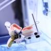 Die Zukunft der Zahnprothesen
